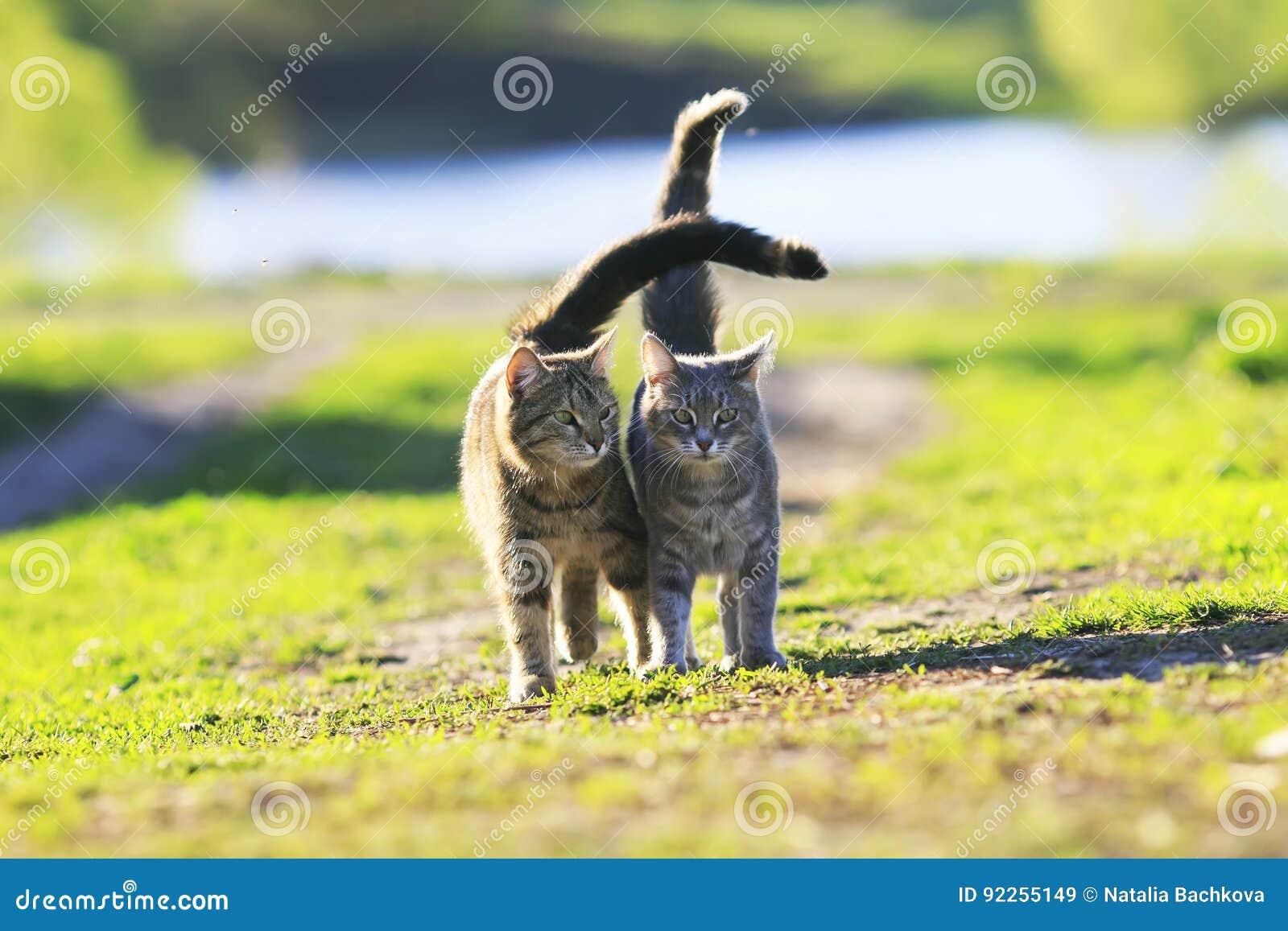 Nettes Kätzchen zwei, das auf grünes Gras nahe bei und Liebkosung auf a geht