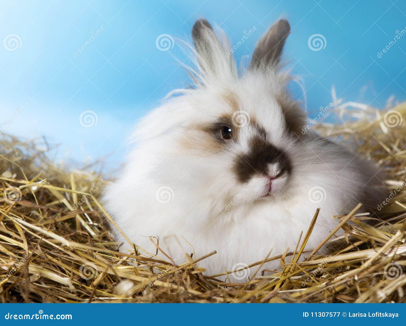 Nettes Kaninchen