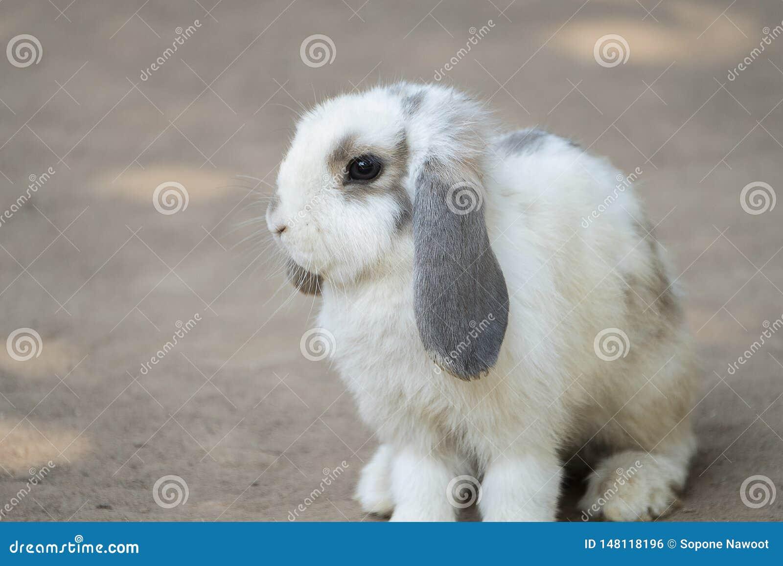 Nettes kleines Kaninchen