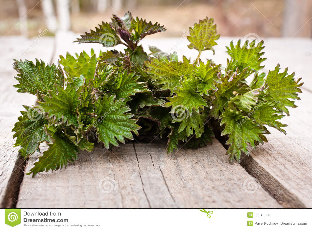 Nettle on the wooden table
