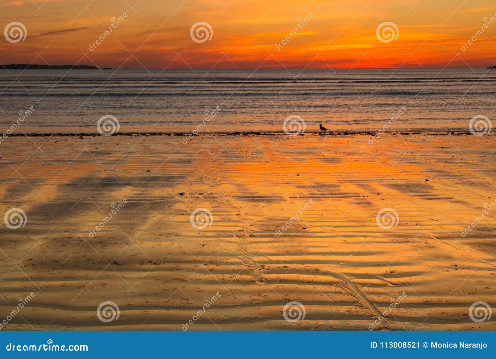 Neu-England Herbstsonnenaufgang am Strand