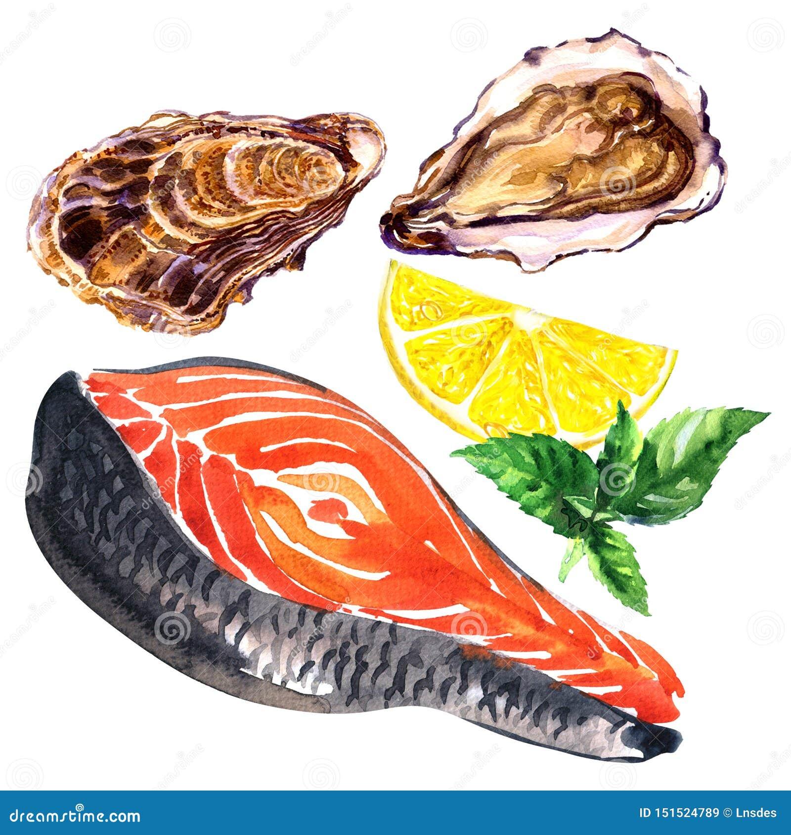 Neue rohe Scheibe von roten Fischlachsen und -auster mit Zitrone, Basilikum, lokalisiert, Meeresfrüchte, gesunde Nahrung, Handgez