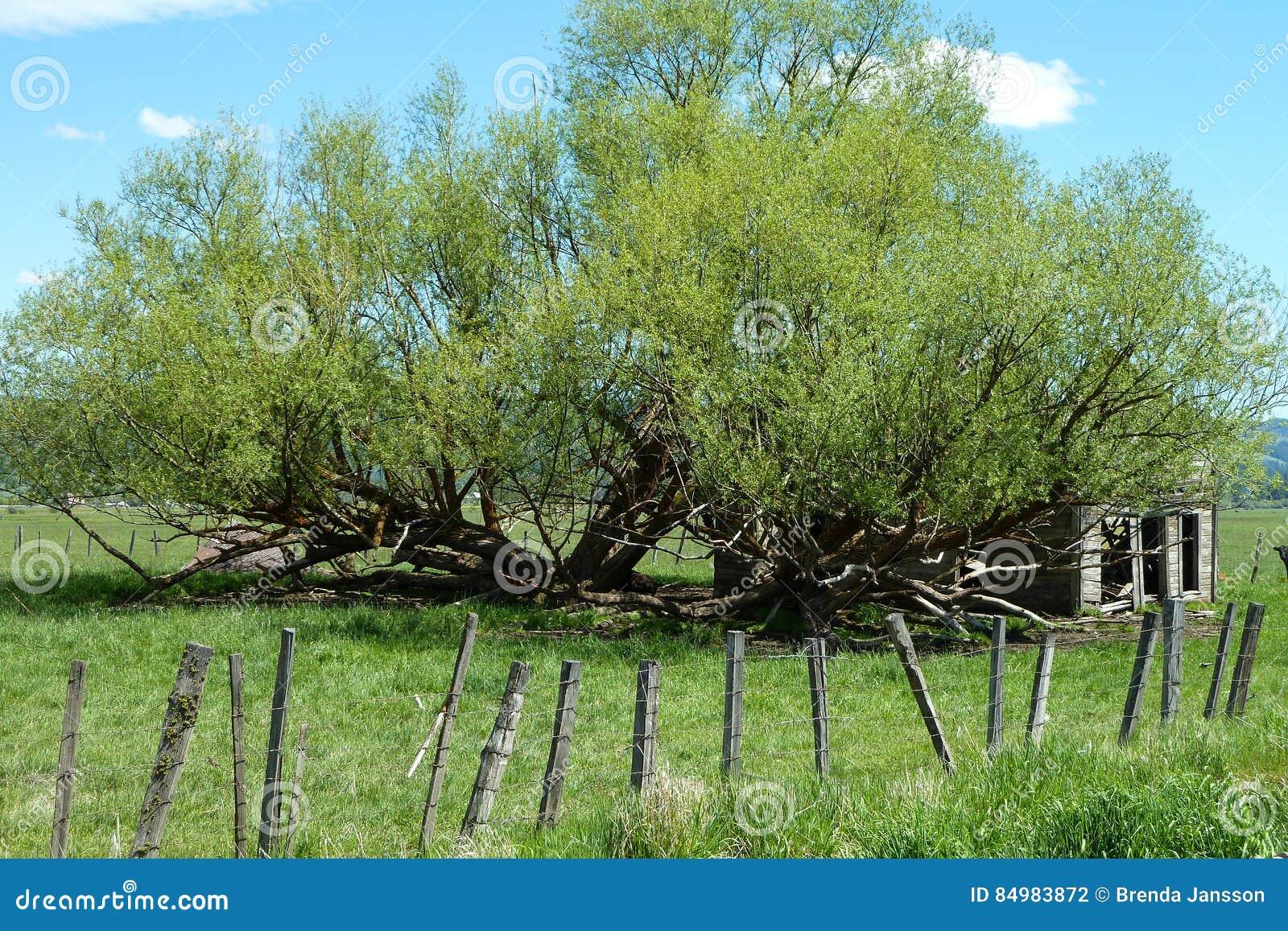 Neue Wiesen, historische Scheune Idahos