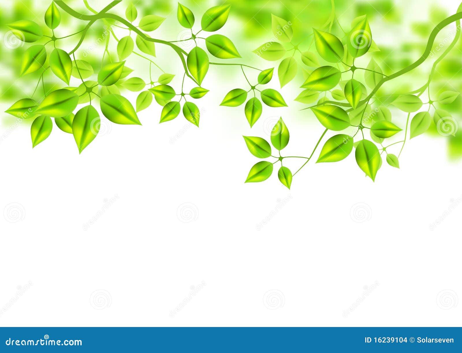 Neuer grüner Hintergrund