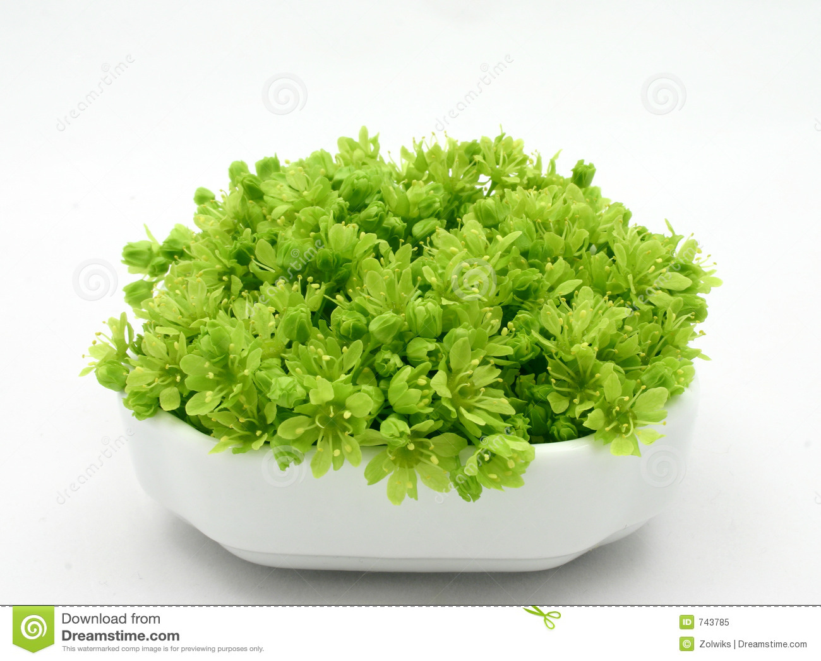 Neues Grün