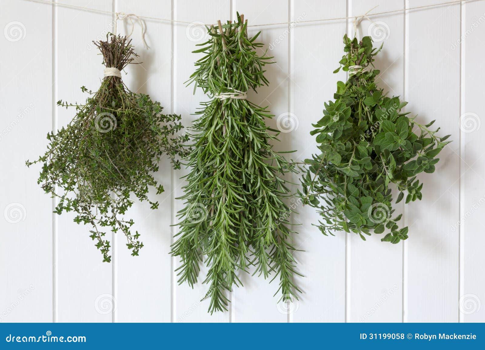 Different herbs royalty free stock image image 16265346 - Neues Kraut H Ngen Lizenzfreie Stockfotos
