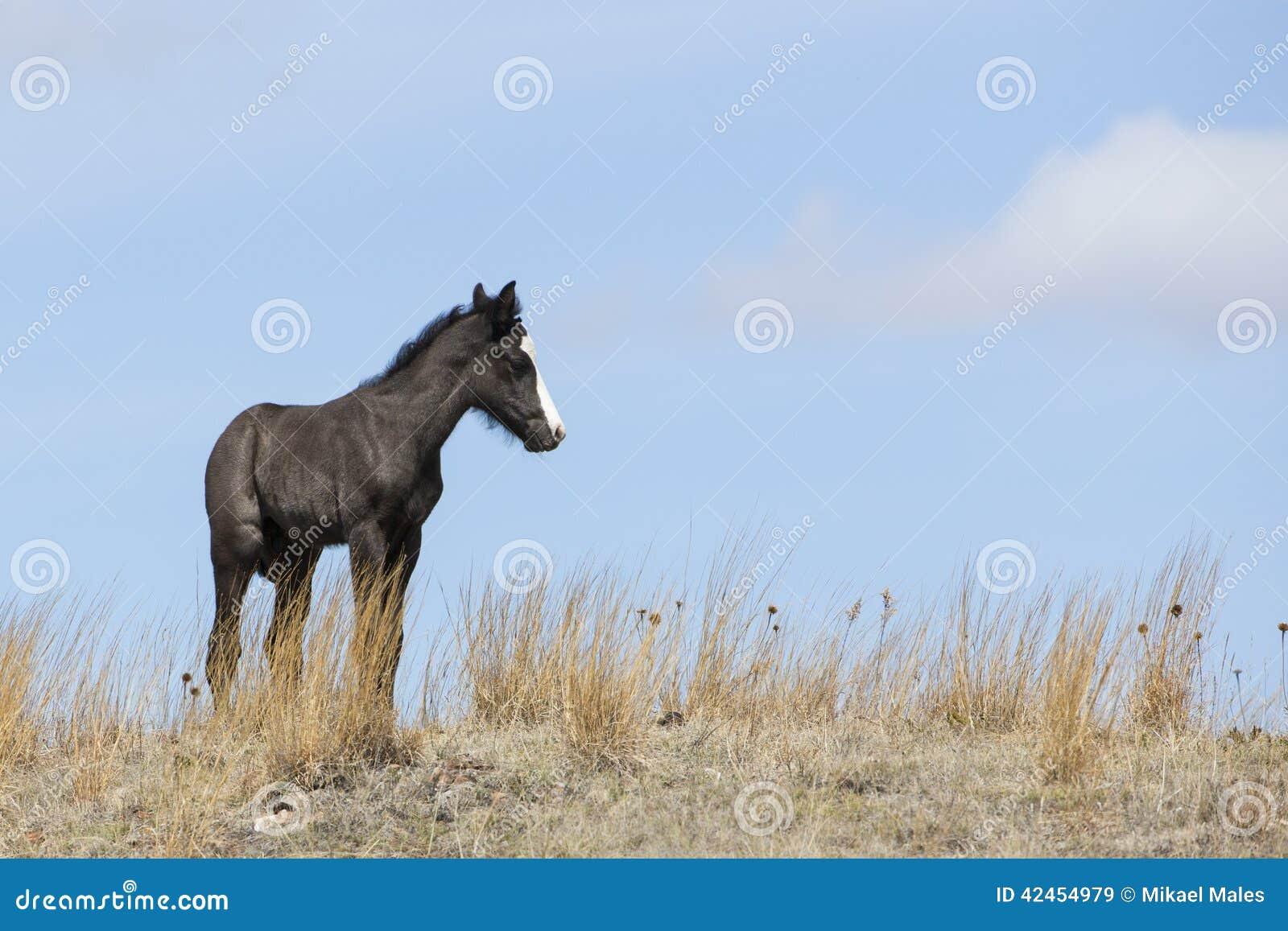 Neugeborener Colt, der auf Graslandkante steht