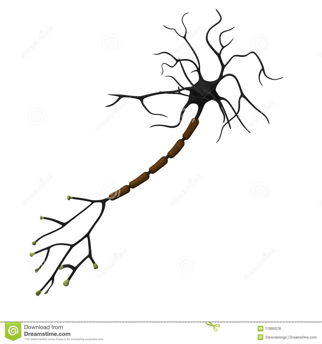 Neuron Royalty Free Stock Photos - Image: 11895078