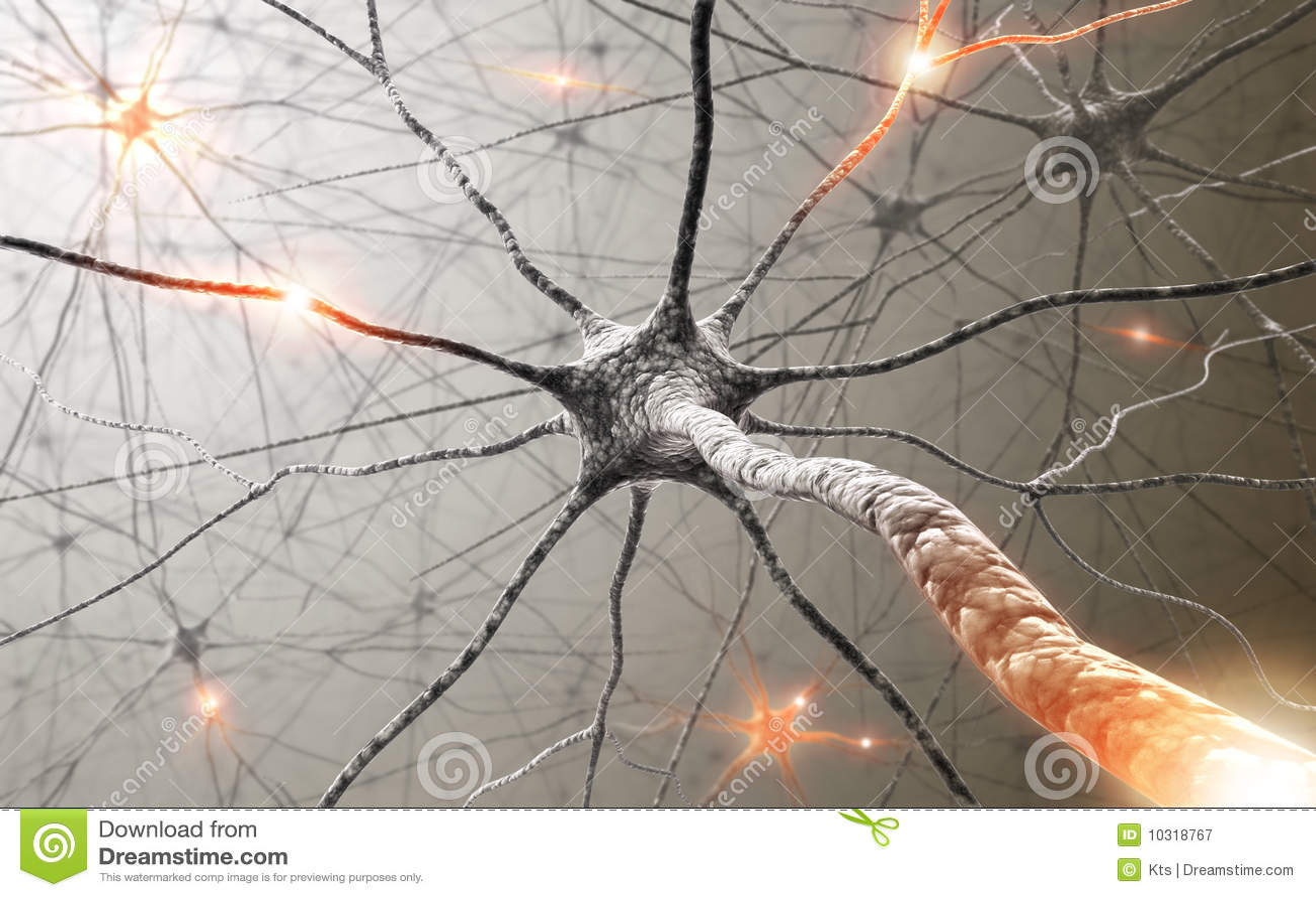 Neuronen de macht van de mening