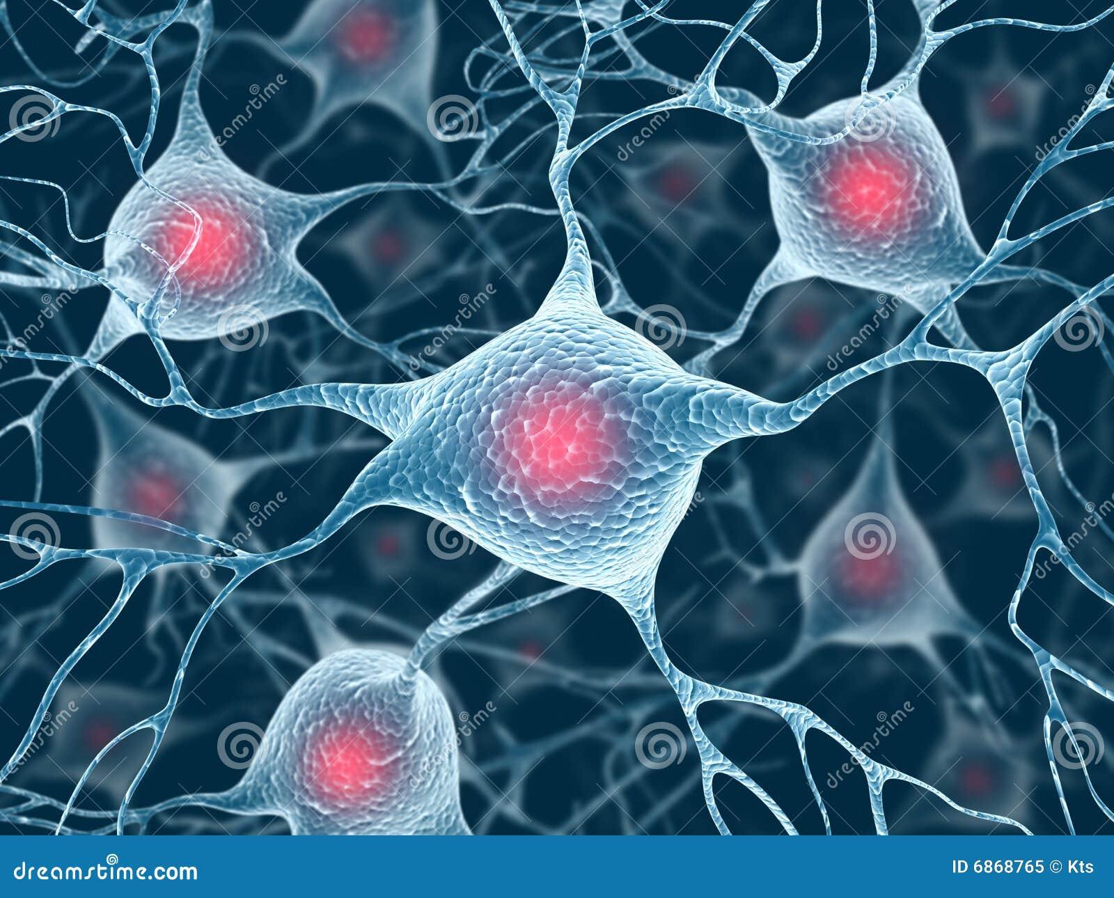 Neuronen und Kern
