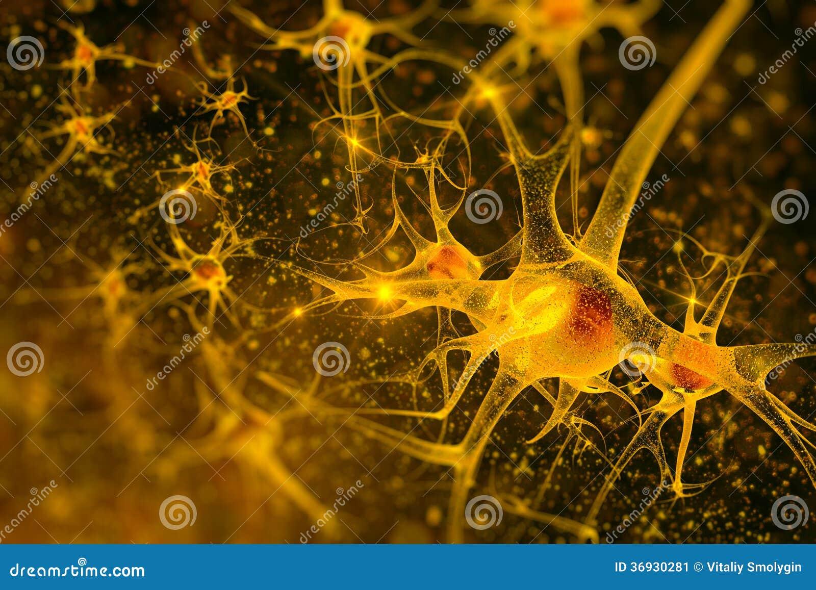 Neuroni dell illustrazione di Digital
