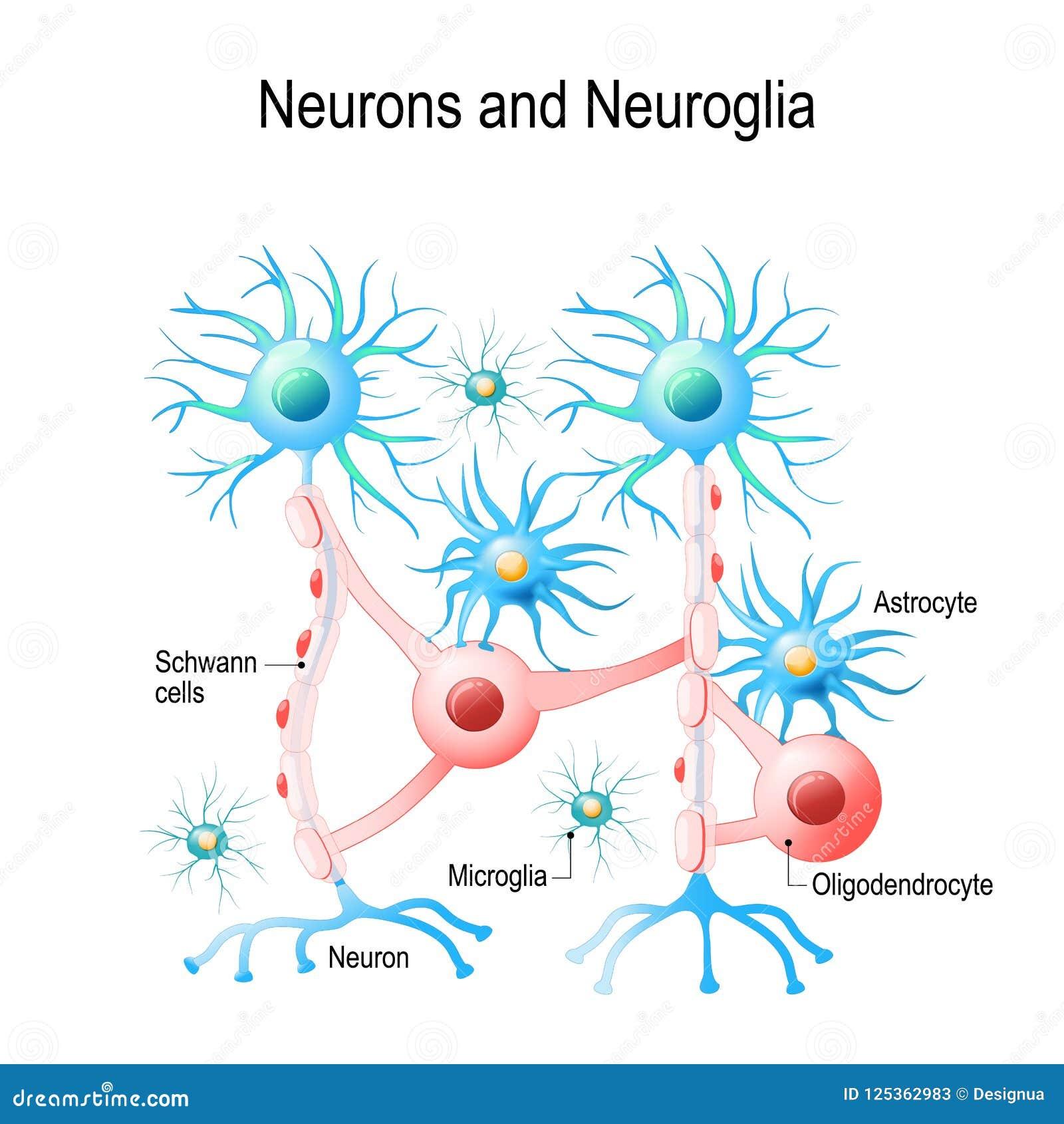 Neurons och neuroglial celler