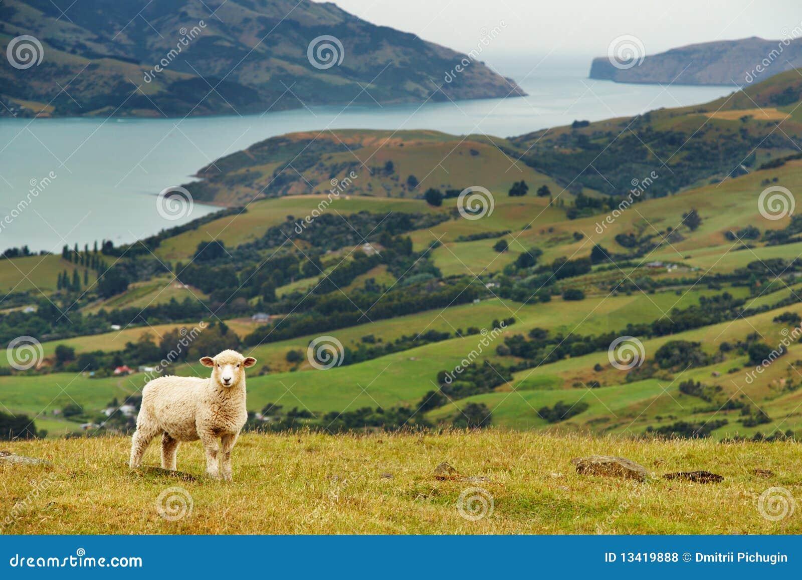 Neuseeland-Landschaft stockfoto. Bild von landschaft ...