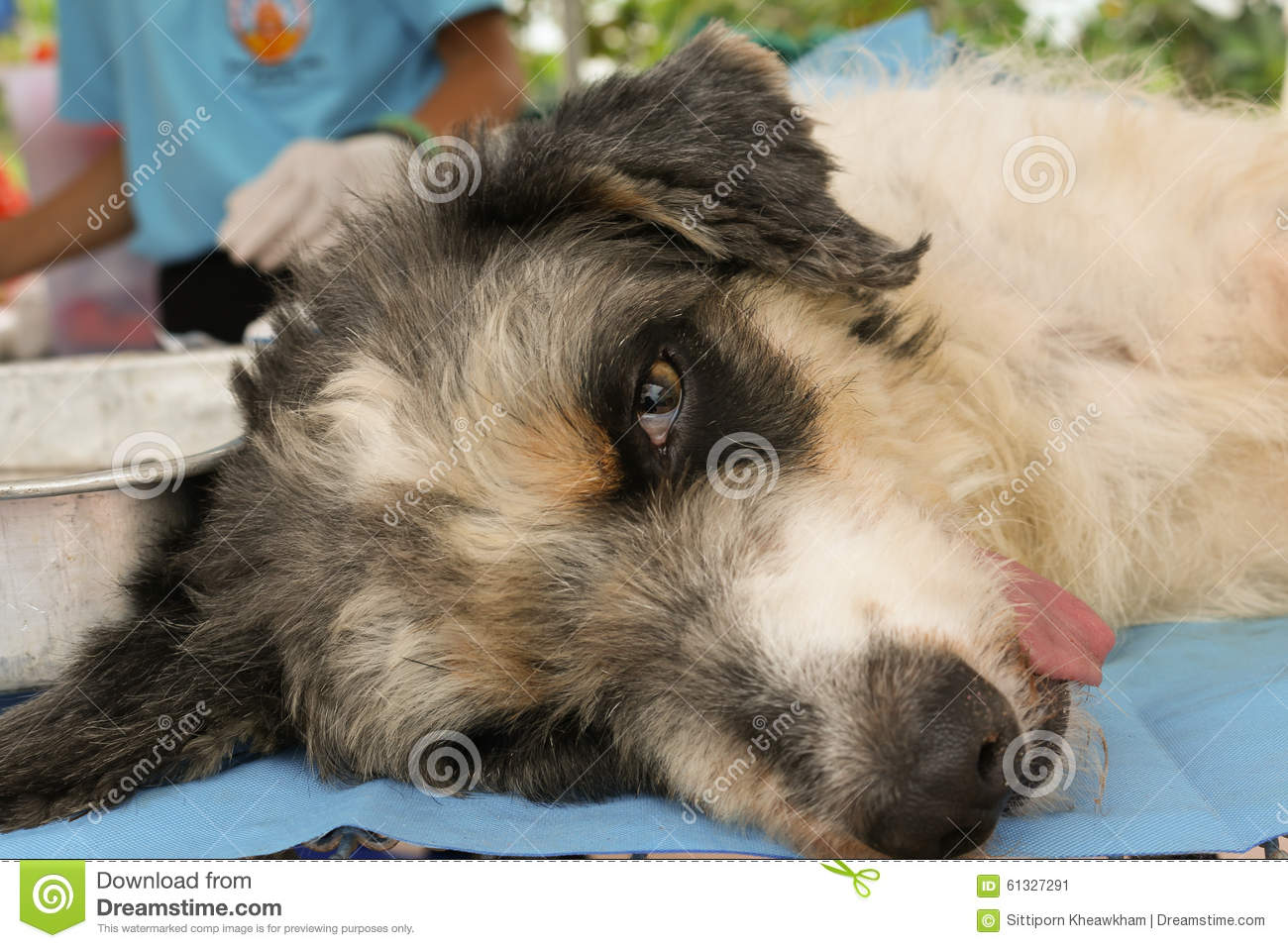 rabies stock photos images pictures images neutering dogs and cats in world rabies day stock image