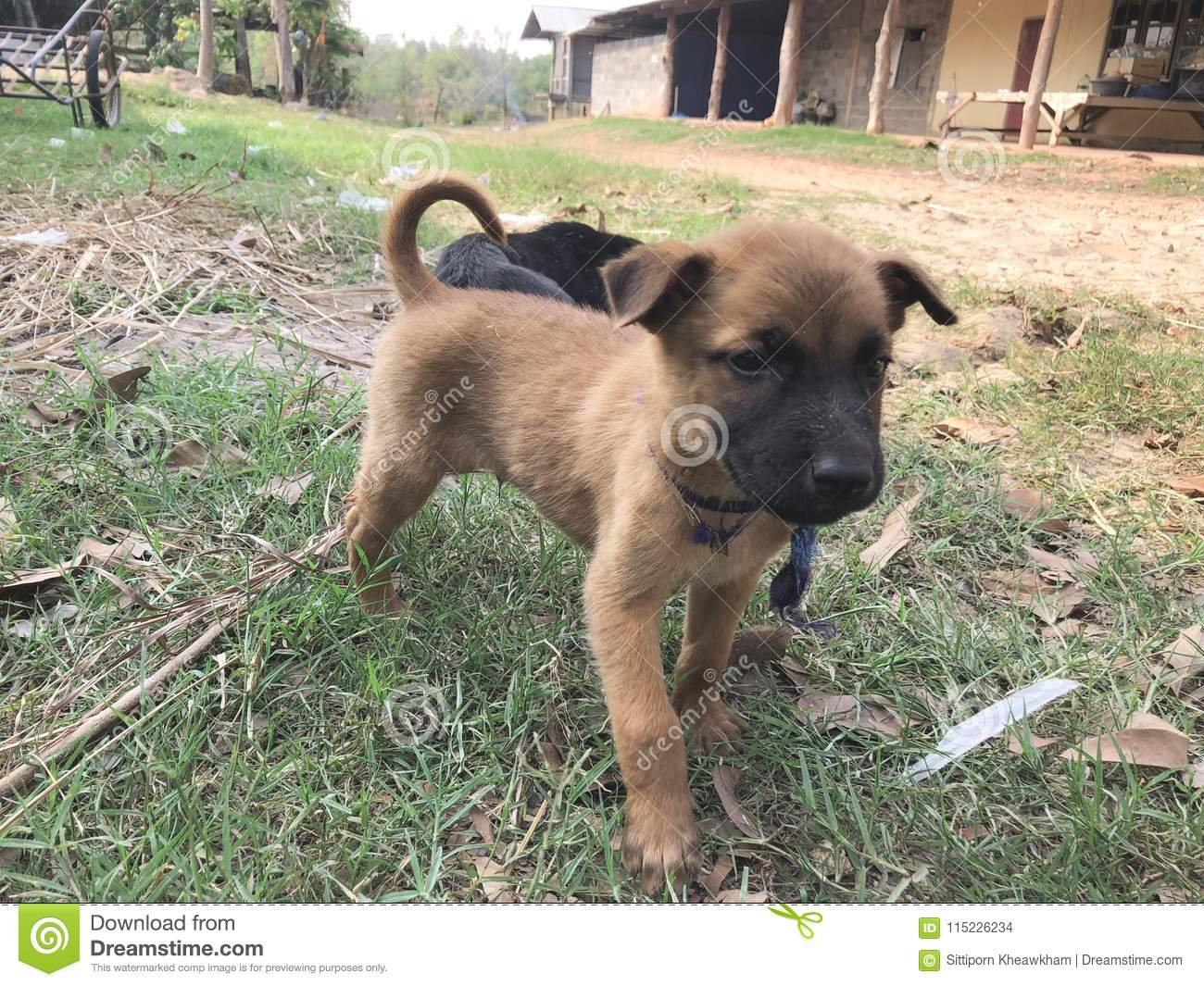 Sterilization of dogs - is it necessary