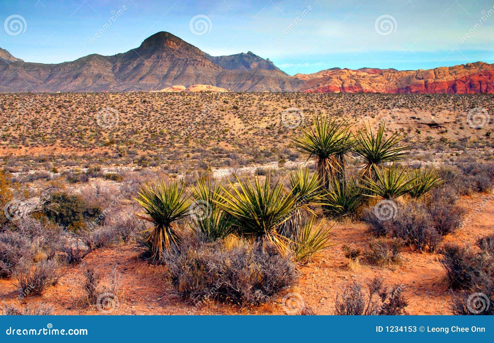 Nevada czerwone skały canyon