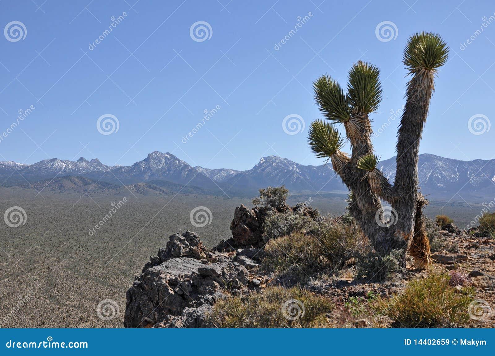 Nevada Desert Landscape Royalty Free Stock Images Image