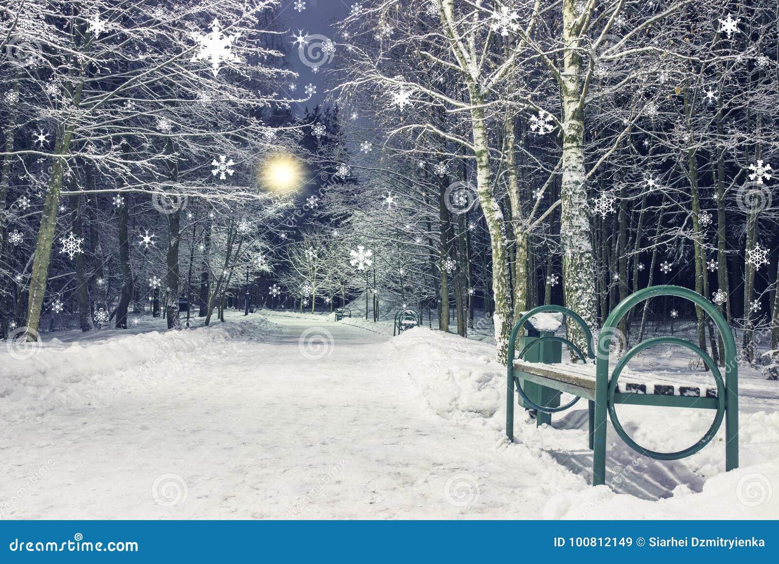 Nevadas en parque de la noche del invierno Tema del Año Nuevo y de la Navidad Paisaje del invierno en ciudad