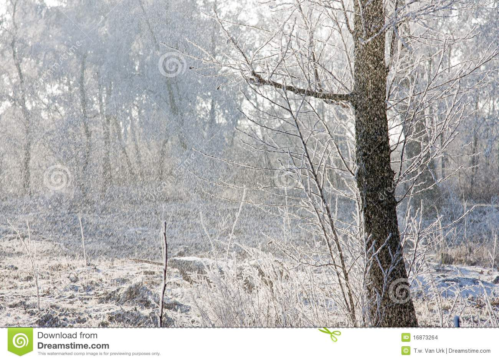 Nevar em uma floresta com o sol brilhante que brilha