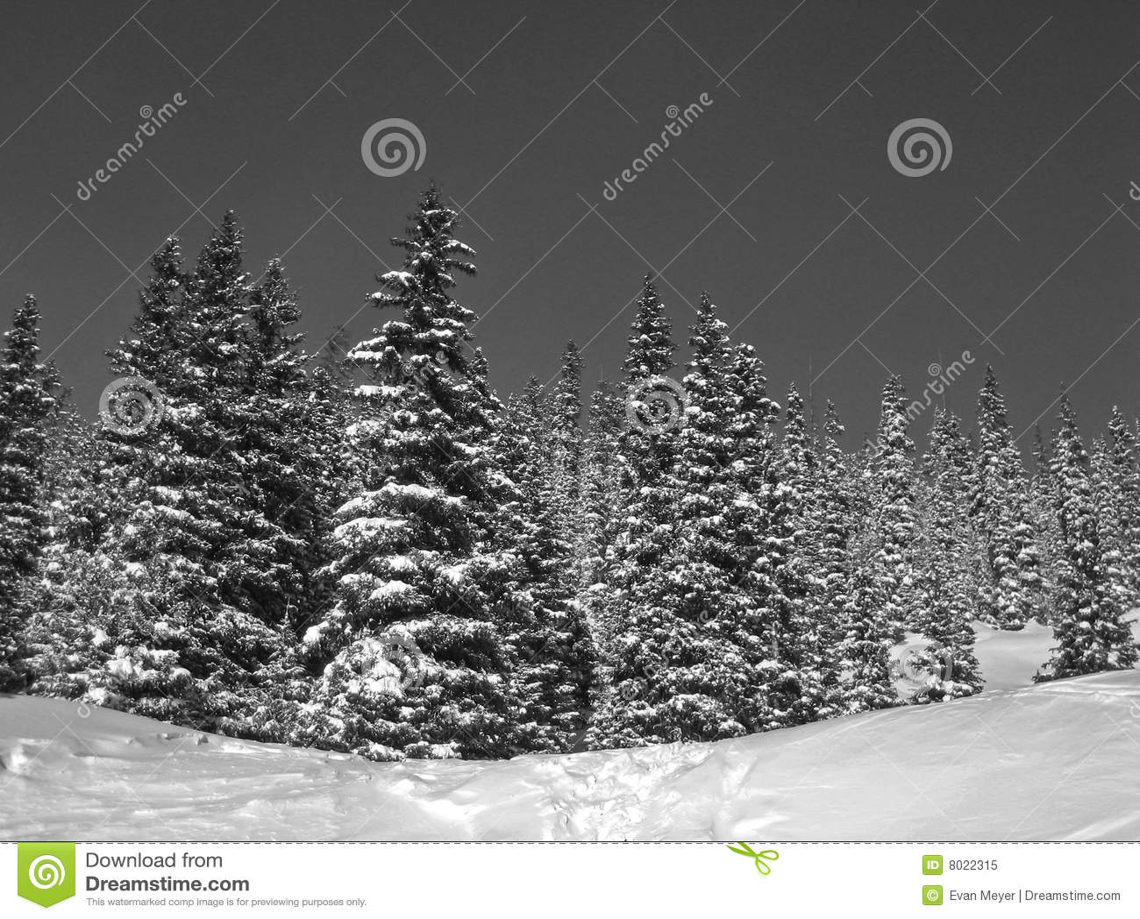 Neve In Bianco E Nero Sugli Alberi Immagine Stock Immagine Di