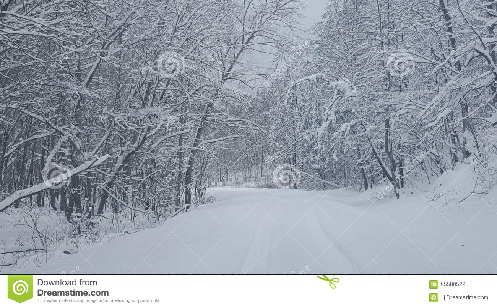 A neve cobriu a estrada