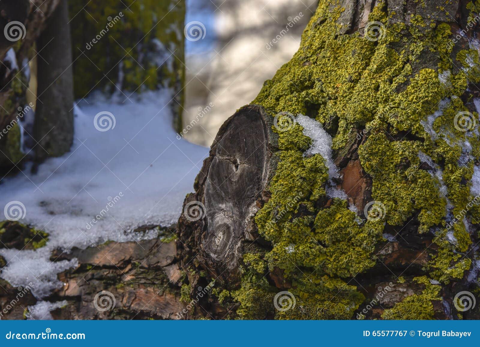 Neve e grama pequena na árvore