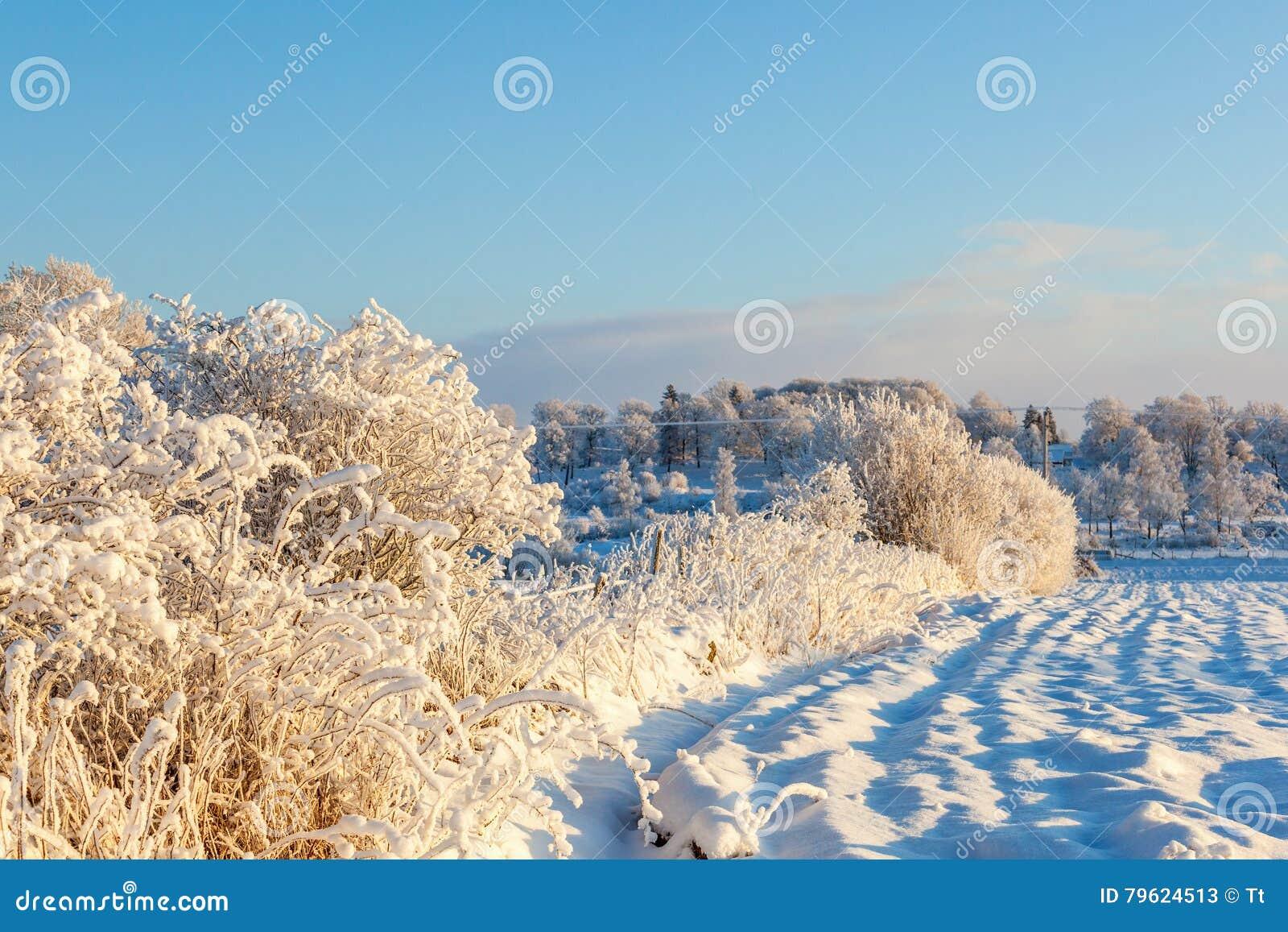 Neve e paisagem da geada