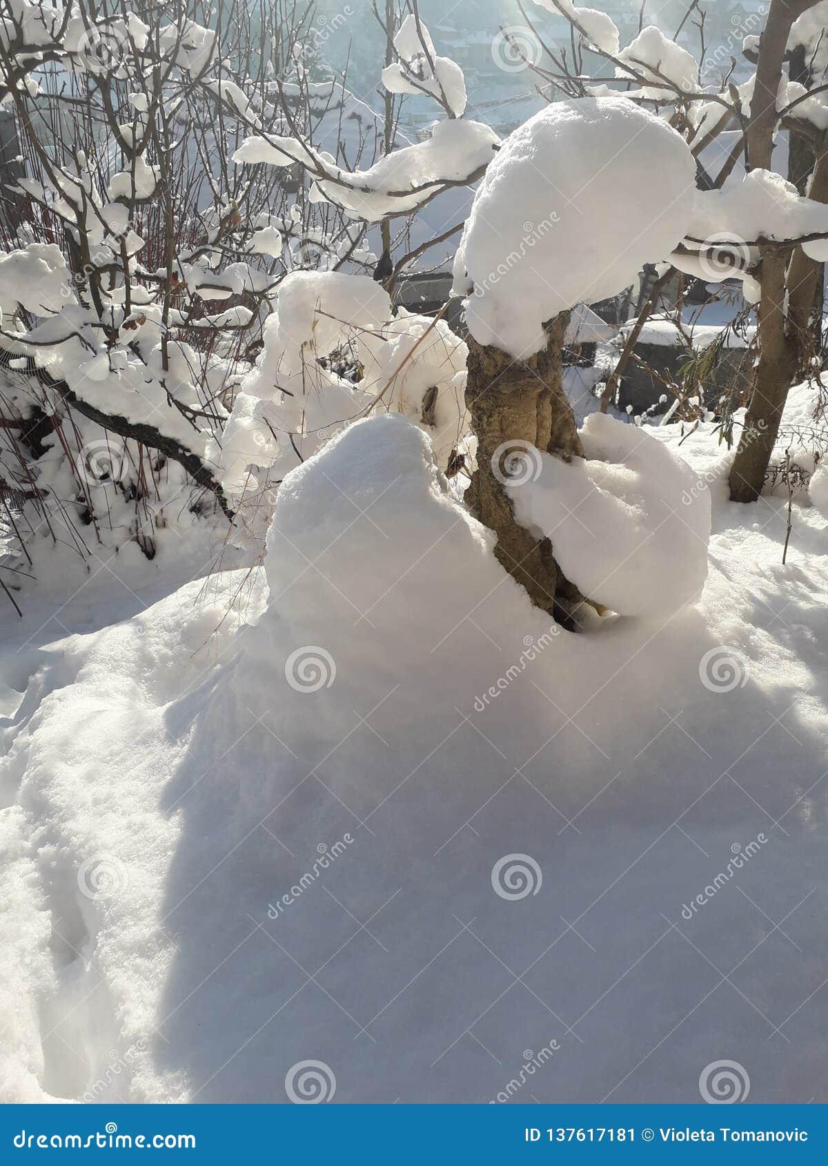 Neve em meu jardim orgânico nevado