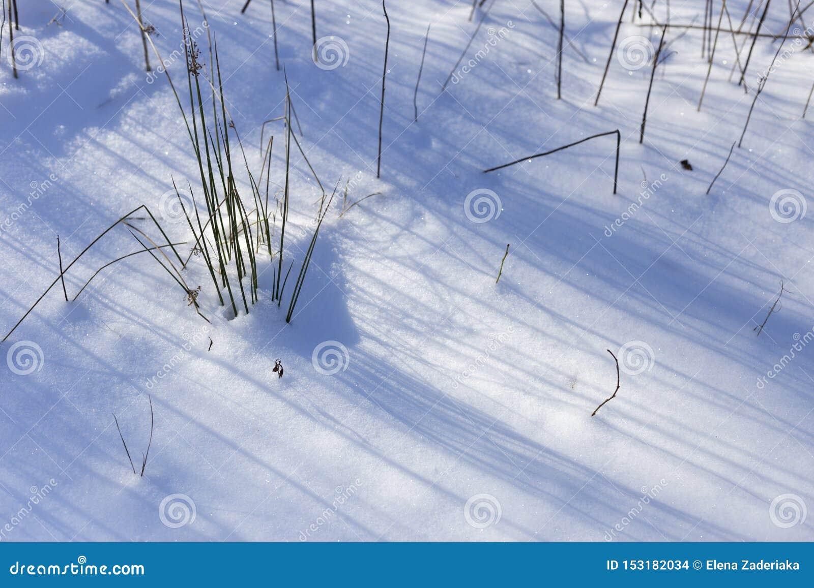 Neve nel giorno di inverno soleggiato luminoso del parco Ci sono ombre di erba sulla neve