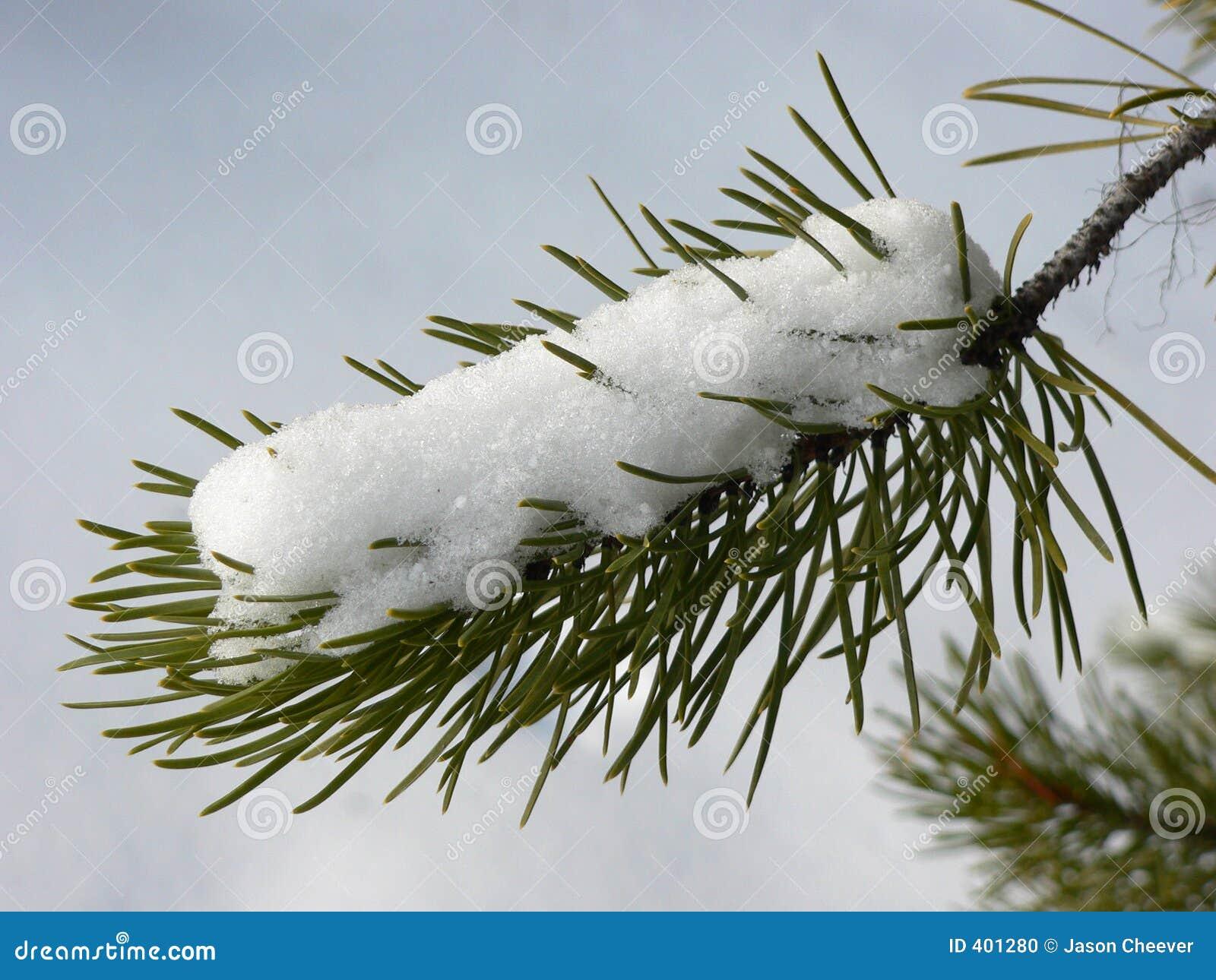 Neve sul Evergreen
