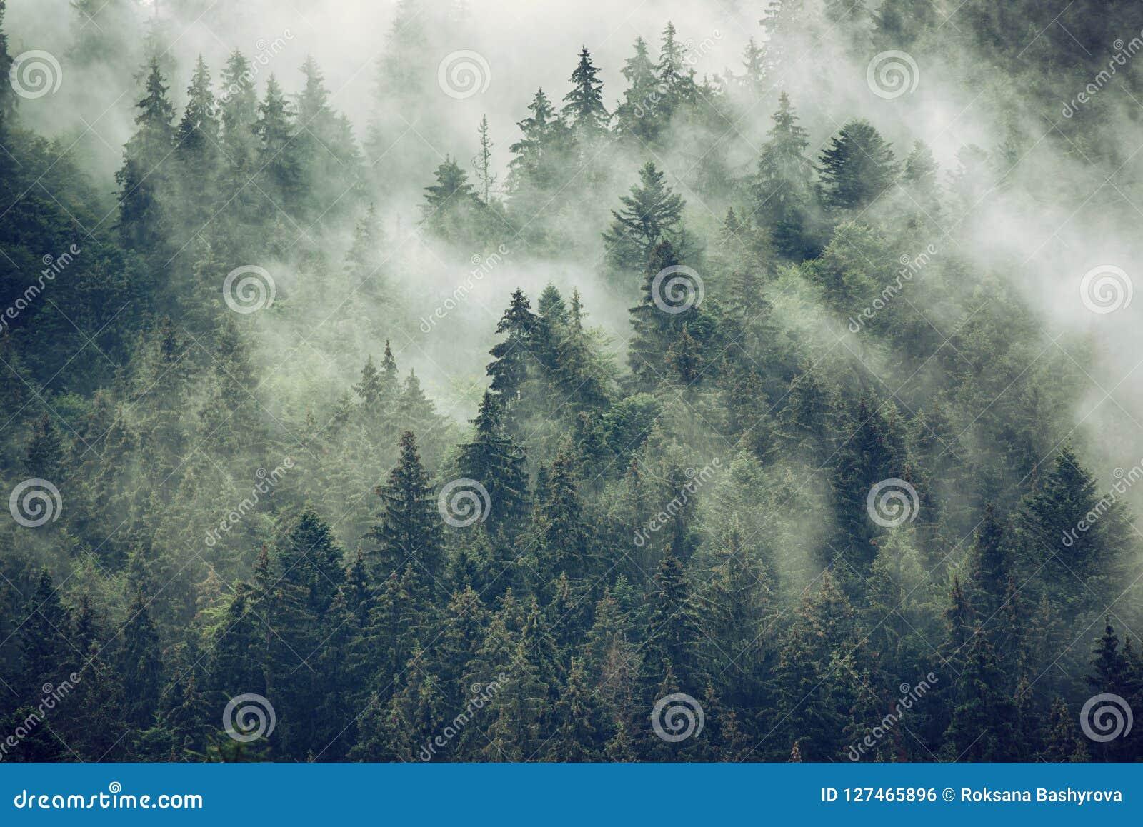 Nevelig berglandschap