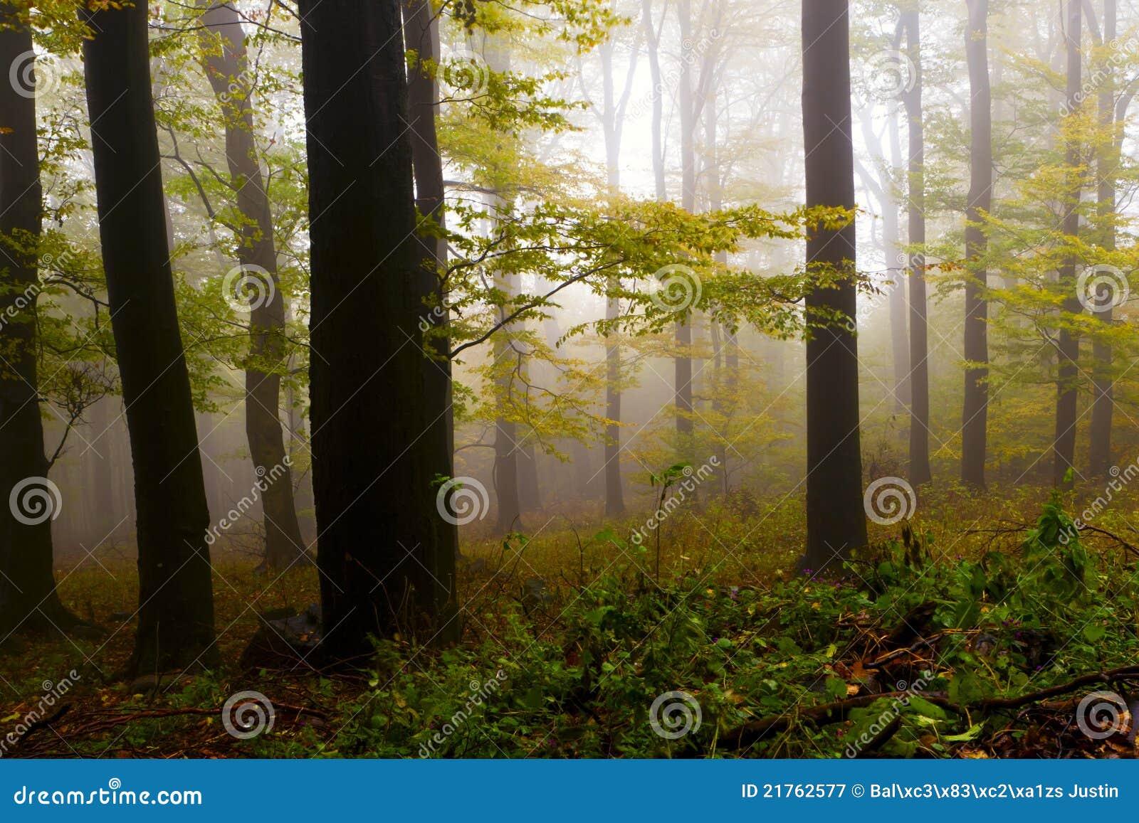 Nevelig de herfstbos, de bergen.