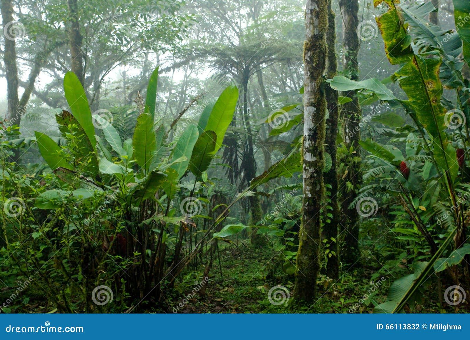 Nevelig, Dicht, Weelderig Tropisch Regenwoud in Costa Rica