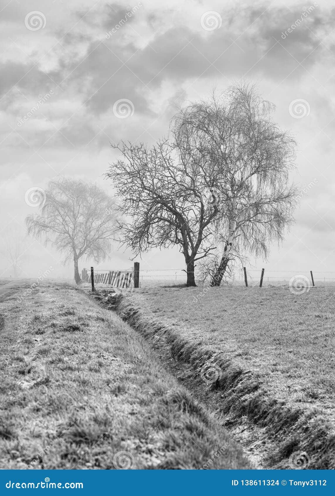 Nevelig landbouwlandschap met mooie gevormde bomen en sloot op een bevroren gebied, Rafels, België