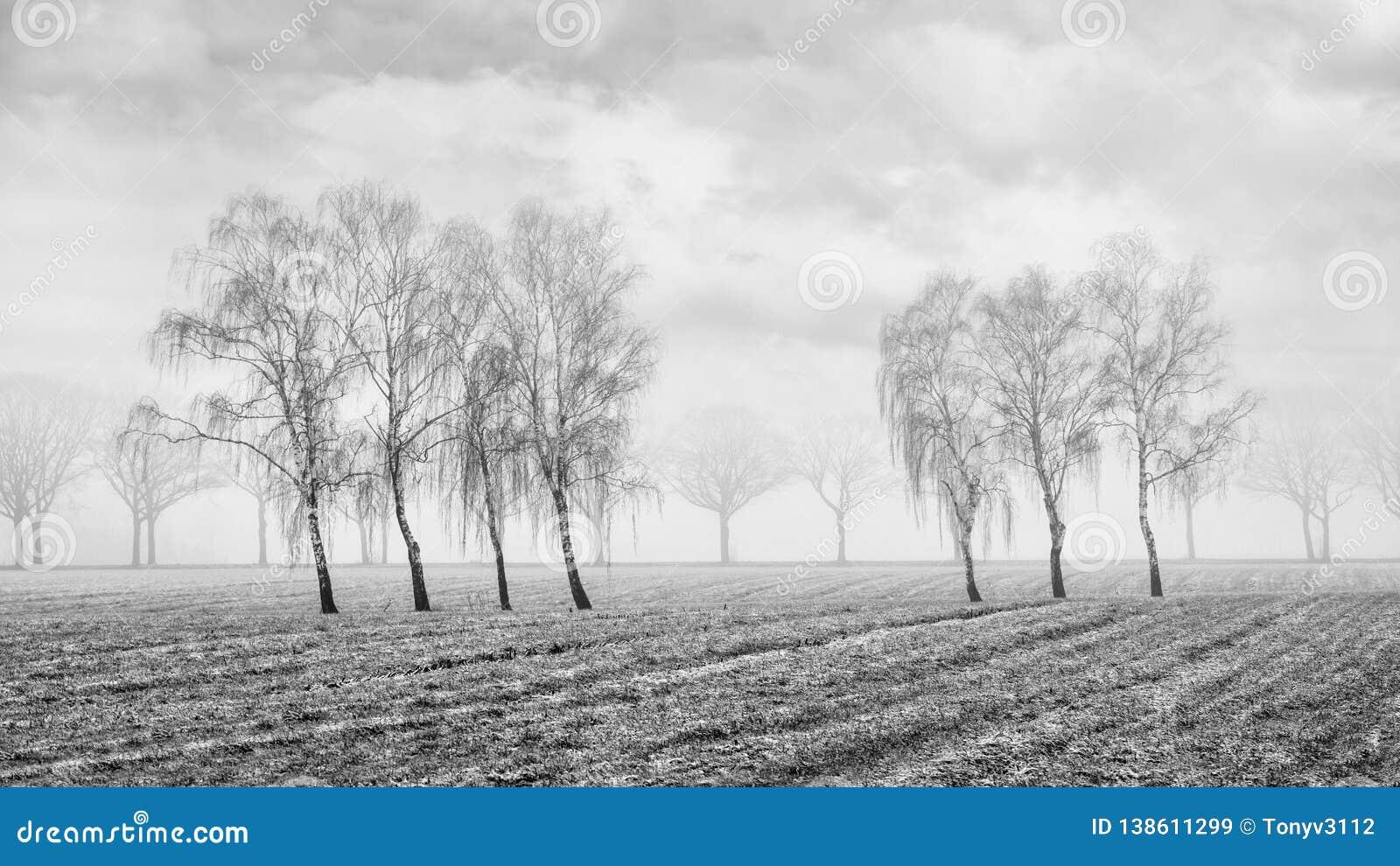 Nevelig landbouwlandschap met mooie gevormde wilgen op een bevroren gebied, Rafels, België