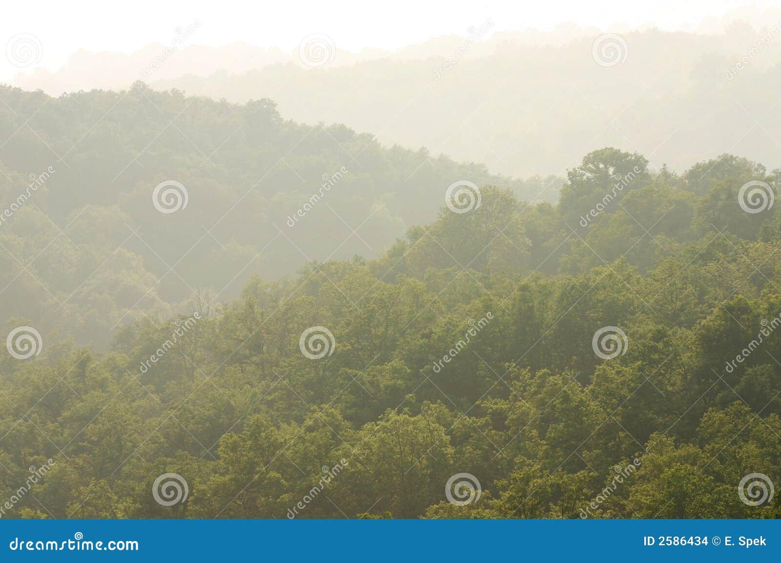 Nevelige groene heuvels