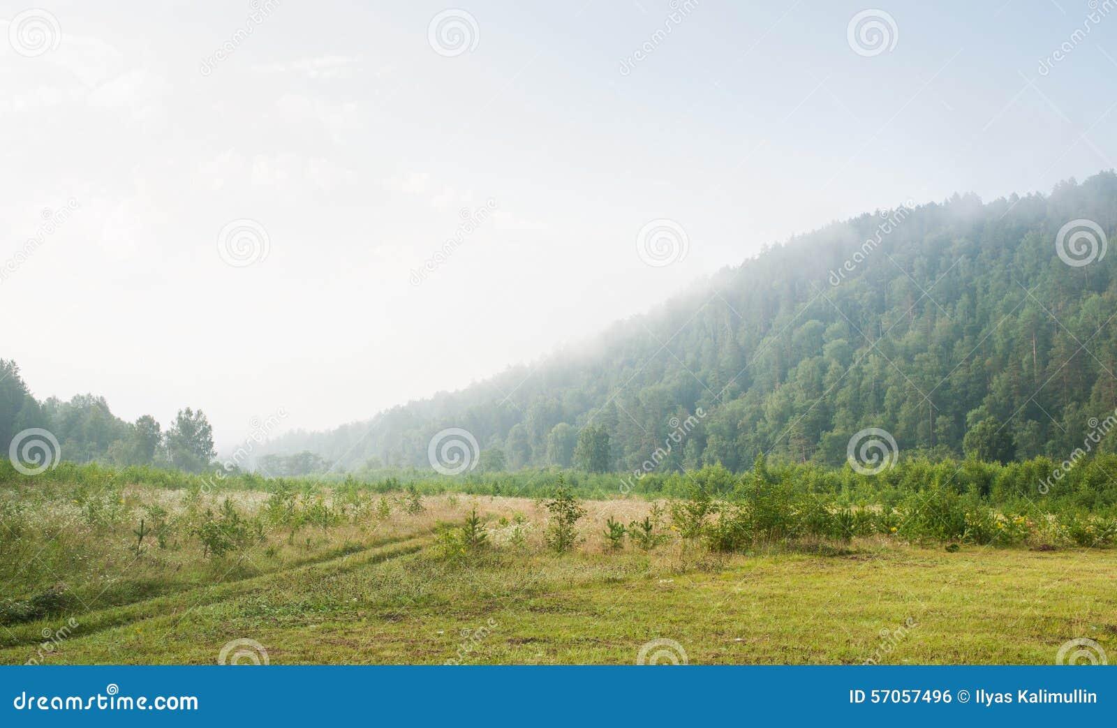 Nevelochtend in het bos