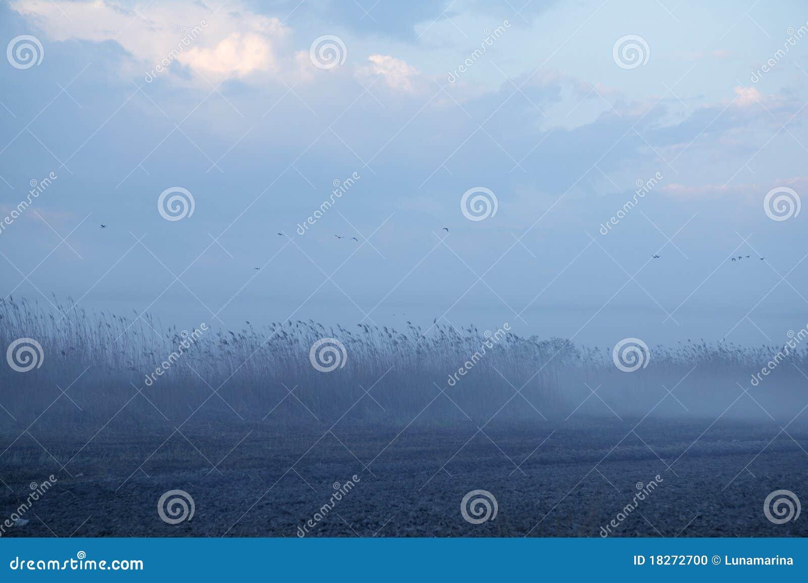 Nevoento amarre a obscuridade da paisagem - cinza azul