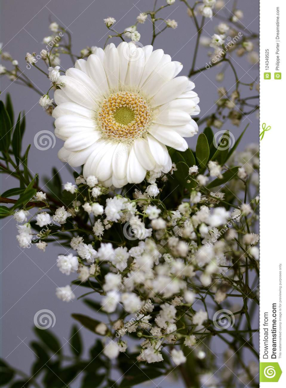 New beginnings bouquet daisy flowers white petals loyal love stock download new beginnings bouquet daisy flowers white petals loyal love stock image image of dawn izmirmasajfo