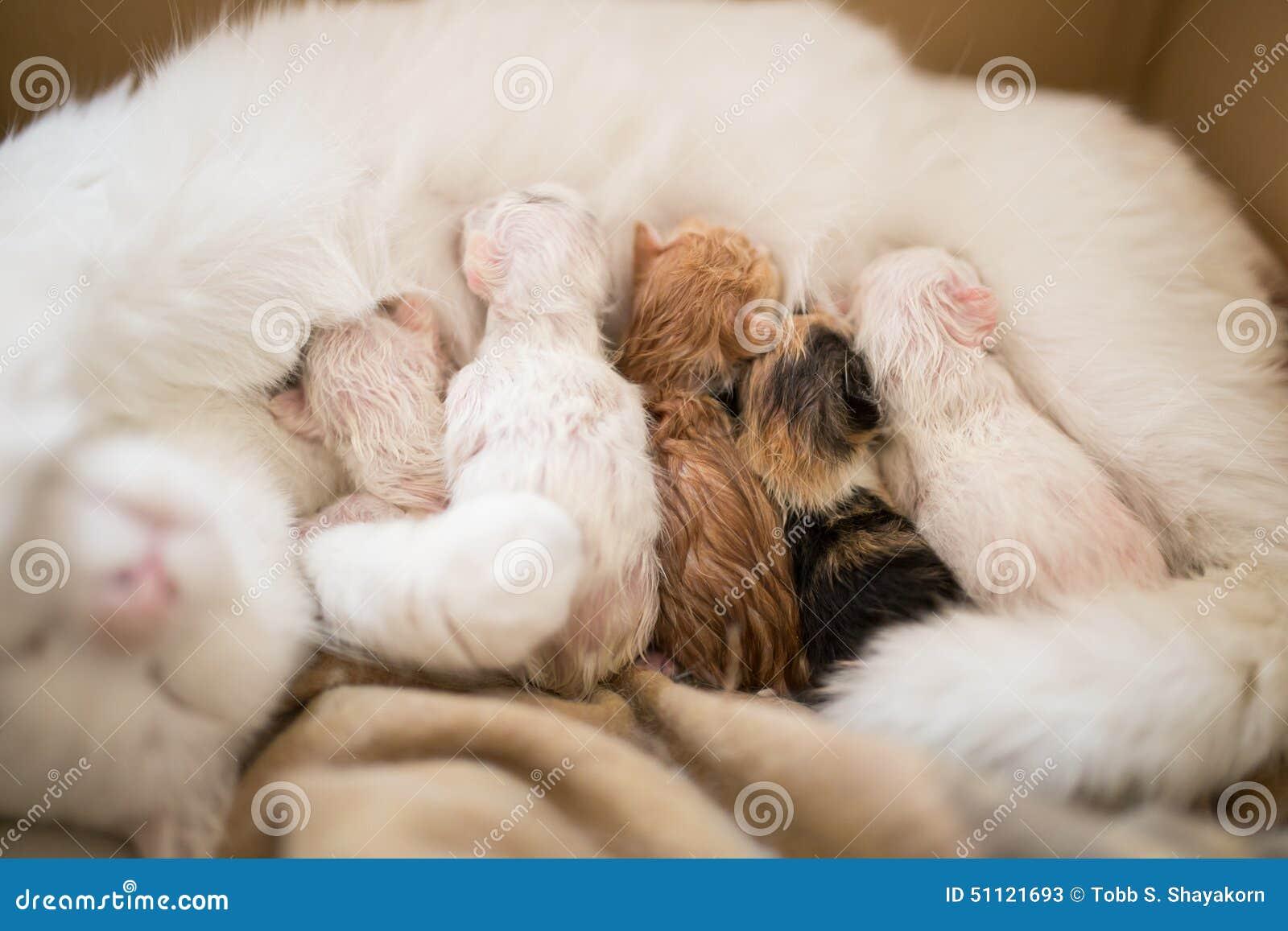 New born cats