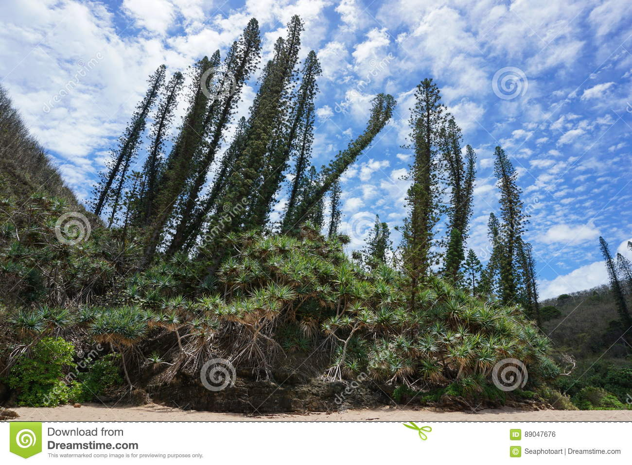 New Caledonia endemic pines with pandanus