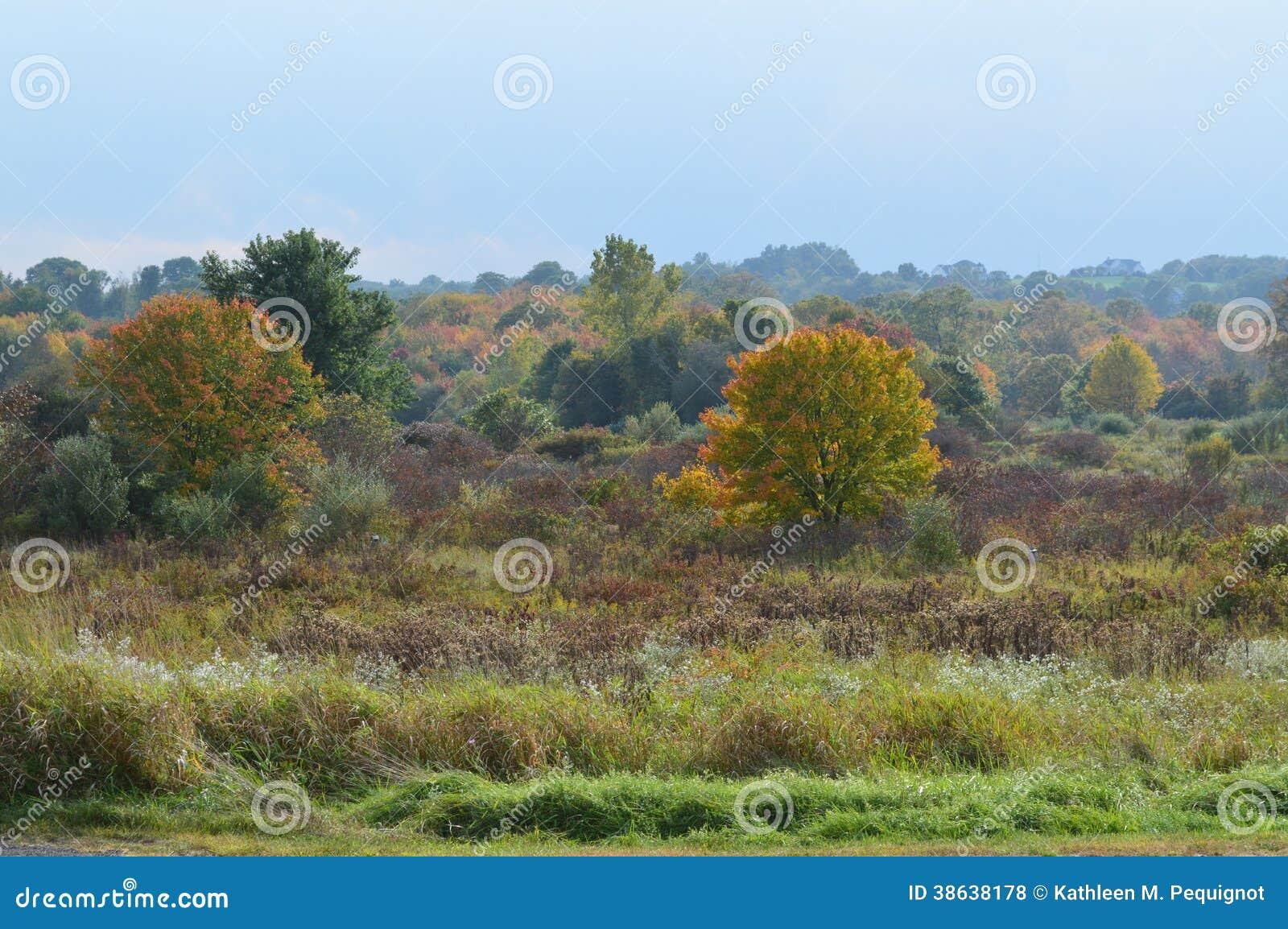 New England fält