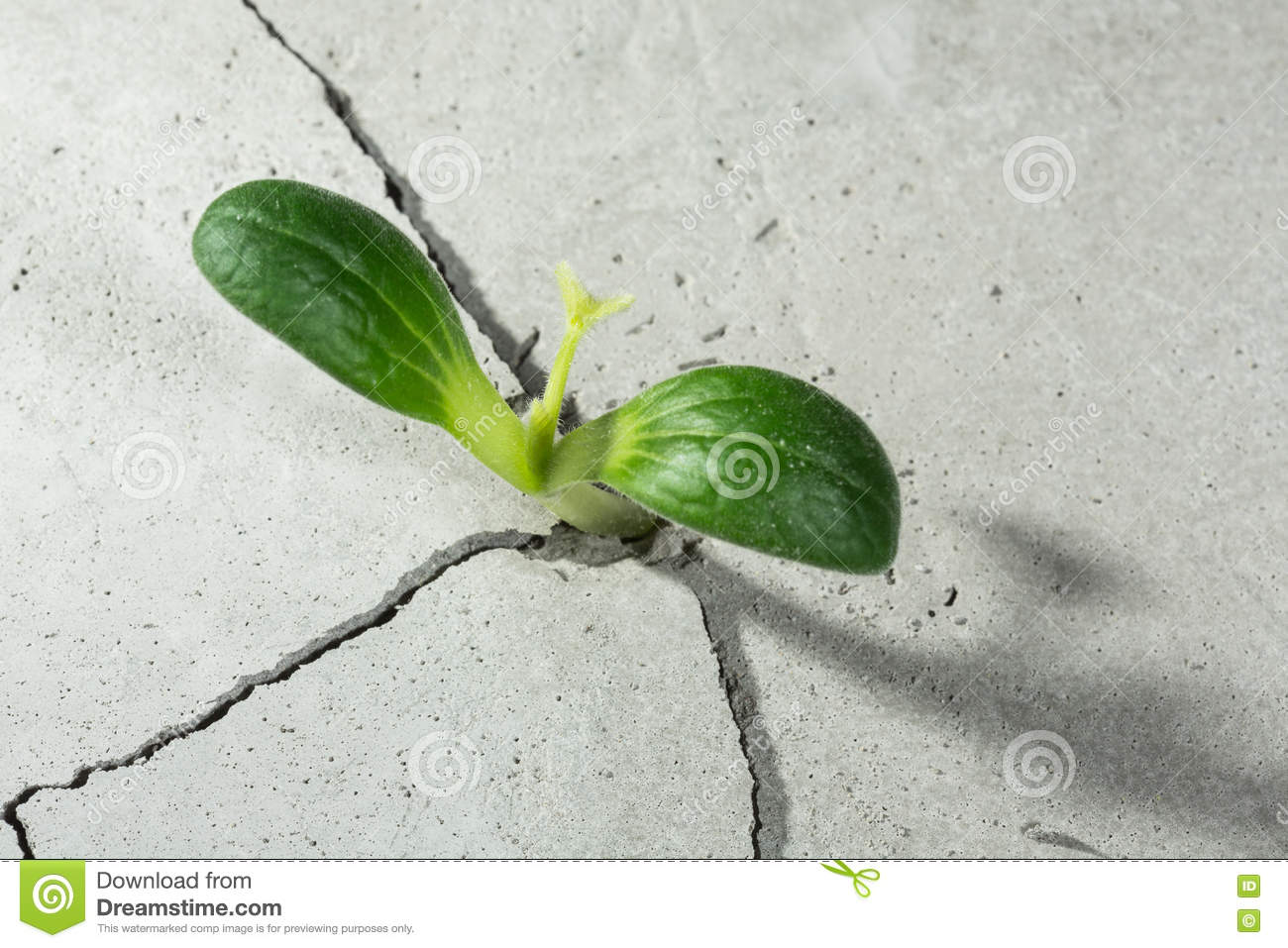New growing life stock photo image 70394978 for Green floor plant