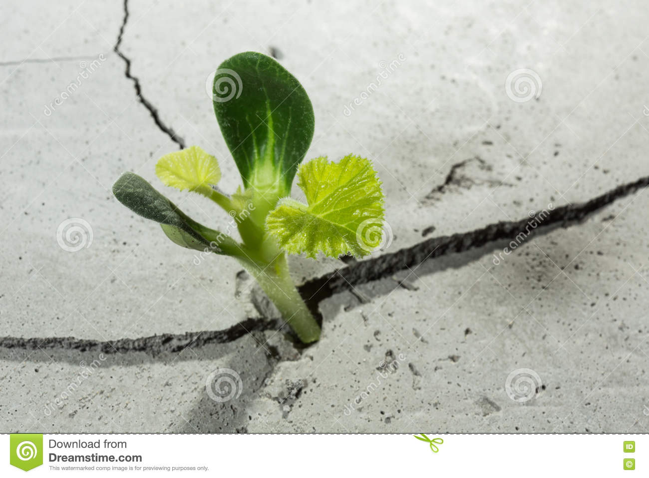 New growing life stock image image of hope growth for Green floor plant