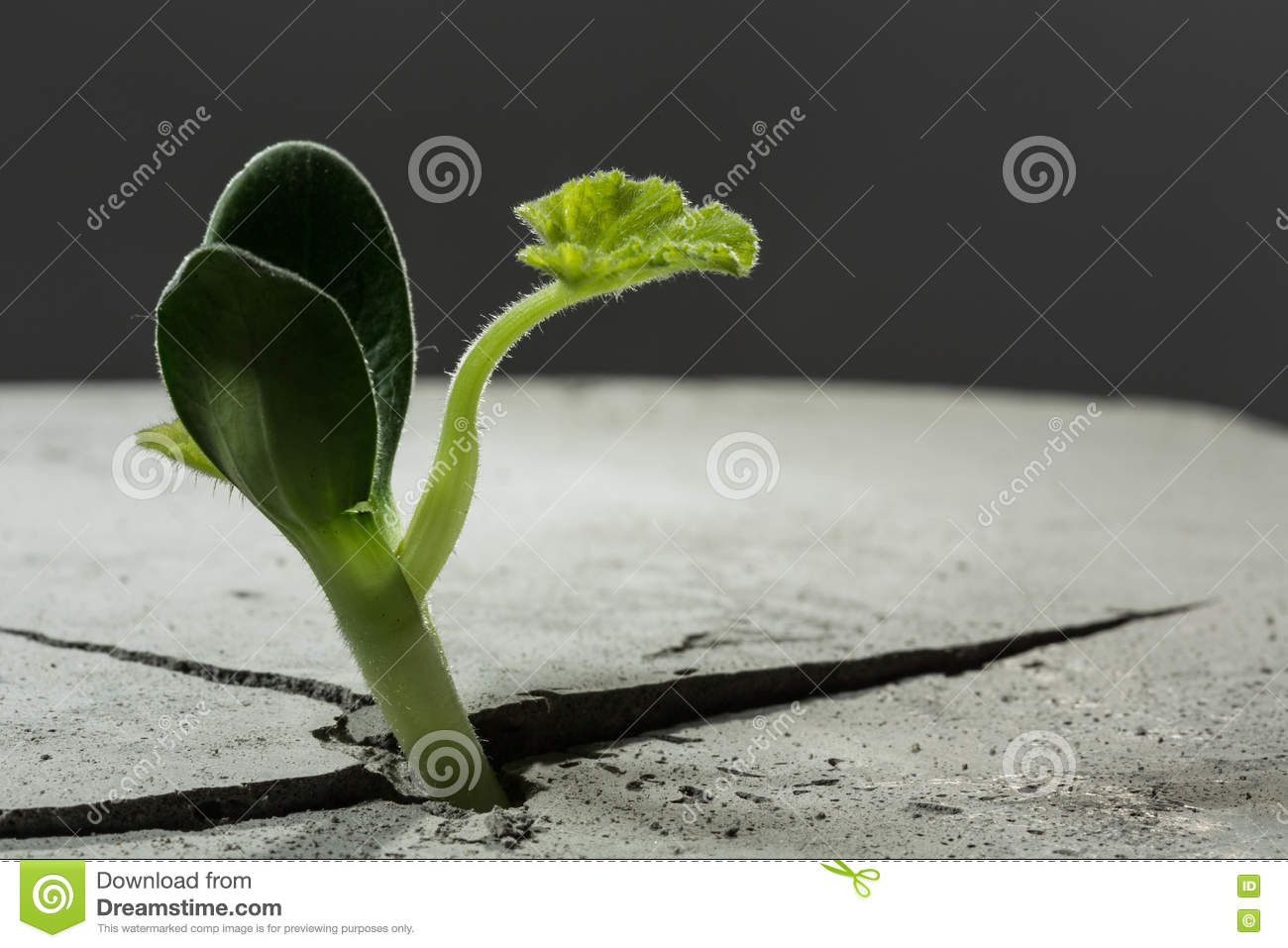 New growing life stock photo image 70396548 for Green floor plant
