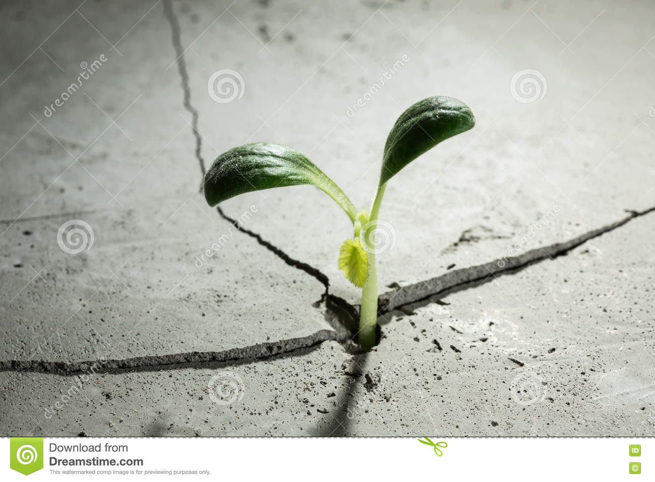New growing life stock image image of material land for Green floor plant