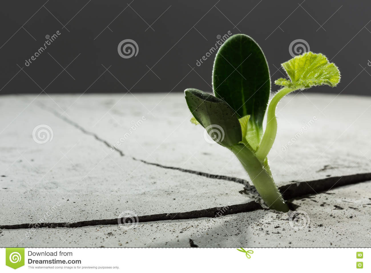 New growing life stock image image of seed closeup for Green floor plant