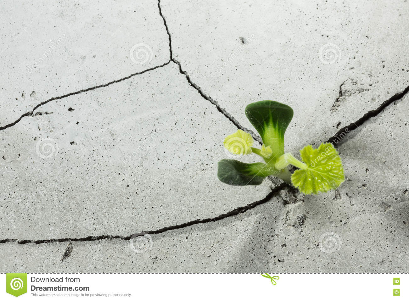 New Growing Life Stock Image Image Of Plant Beginnings