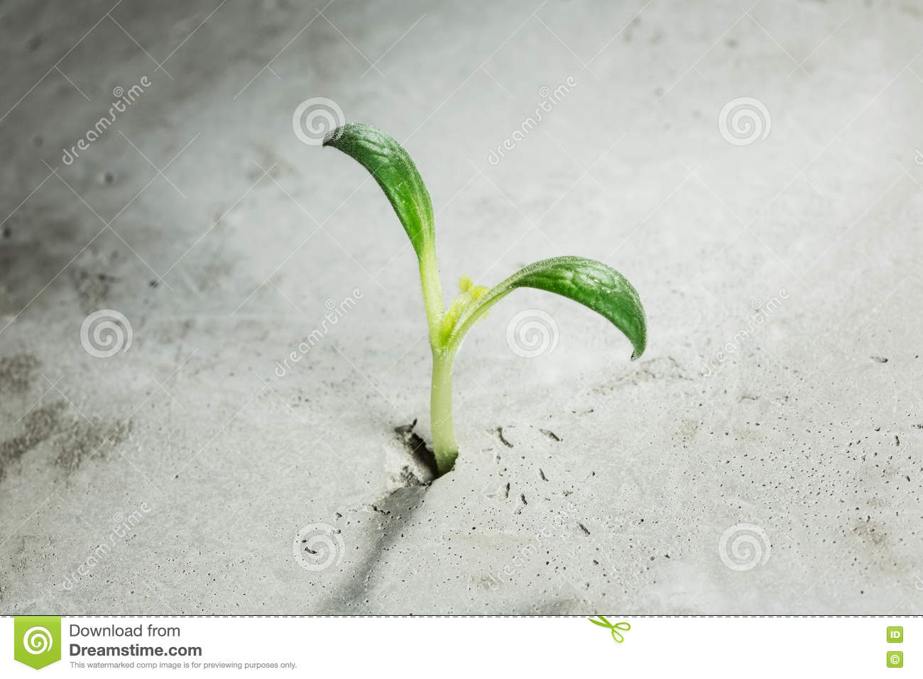 New growing life stock photo image 70398171 for Green floor plant