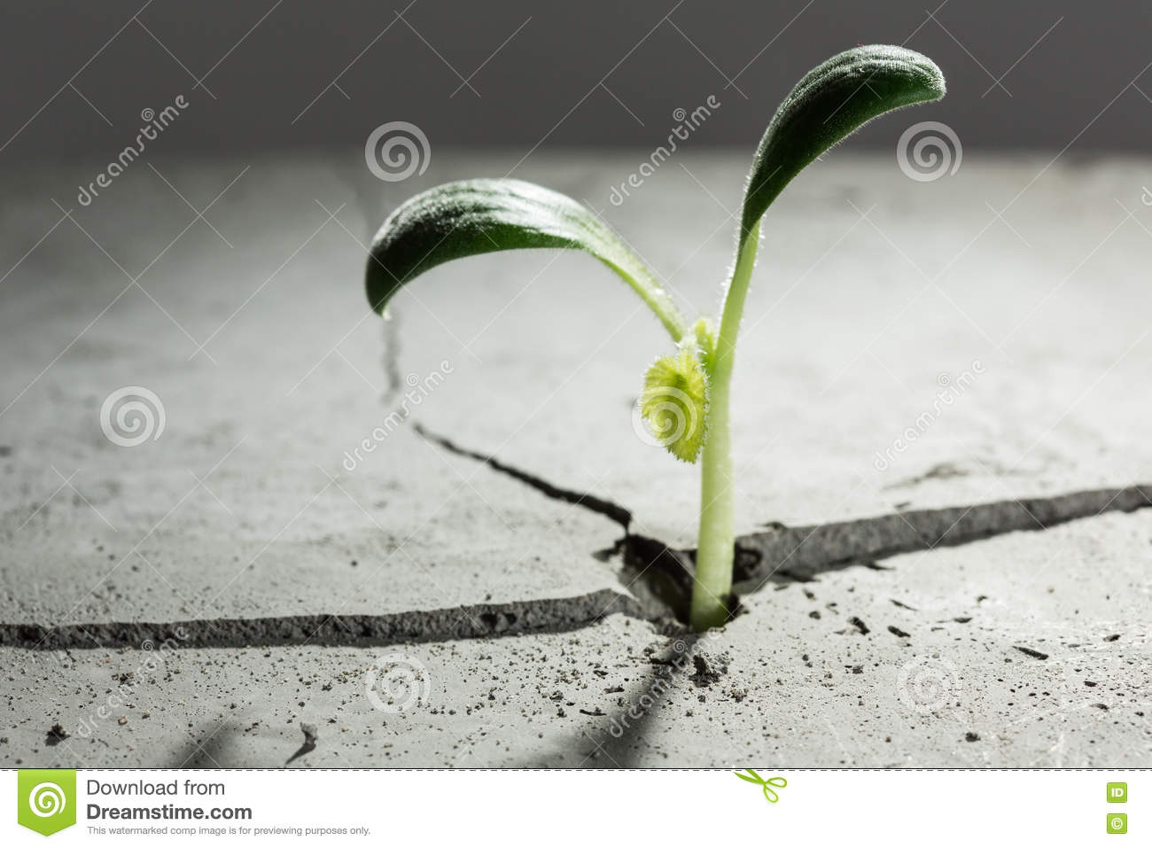 New growing life royalty free stock image cartoondealer for Green floor plant